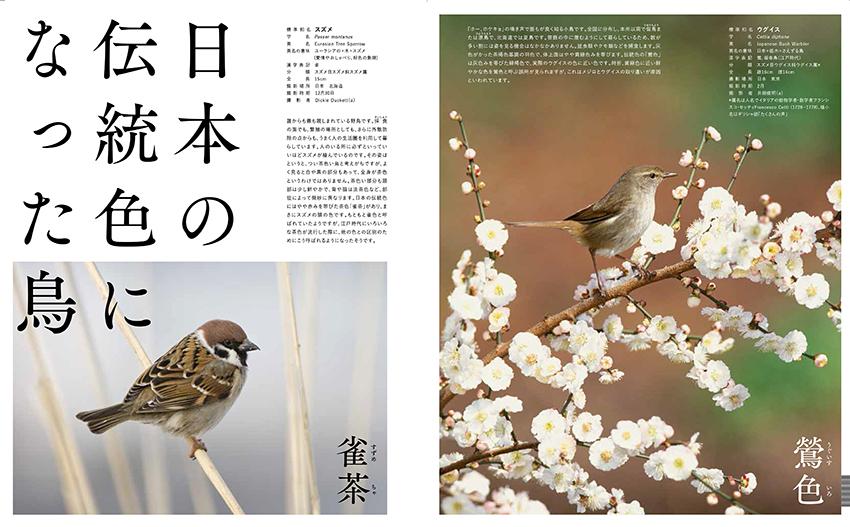 日本の美しい色の鳥