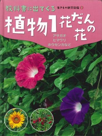 植物1 花だんの花
