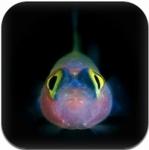 深海のとっても変わった生きもの